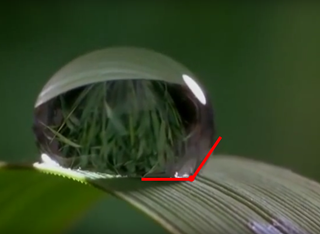 Gota de agua sobre hoja, indicando el aparente ángulo de contacto con la superficie