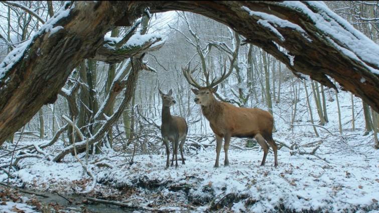 Hungría echa la puerta abajo: los sueños de On Body and Soul iluminaron la Berlinale